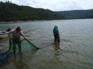 Brutnetzbefischung (1)