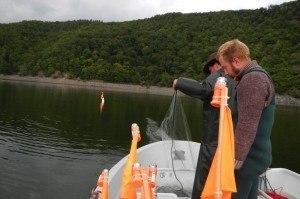Kiemennetzbefischung (1)