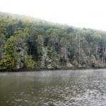 Kormoranschlaffplatz am Affolderner See