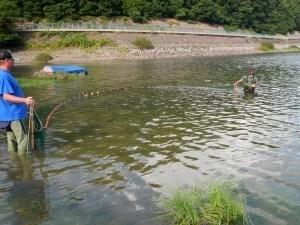 Befischung der Probestelle Waldecker Bucht