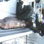 Fuldabefischung 1