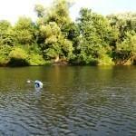 Fuldabefischung 6