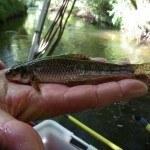 Befischung Twiste 10