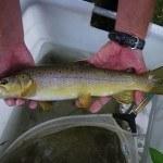 Befischung Twiste 12