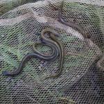 Befischung Twiste 16