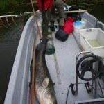 WRRL Befischung 19