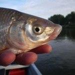 WRRL Befischung 27