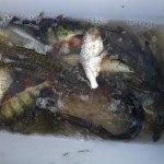 Mainbefischung 26