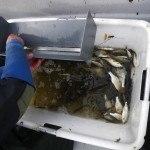 Mainbefischung 29