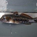 Mainbefischung 31