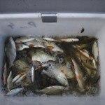 WRRL Befischung 37