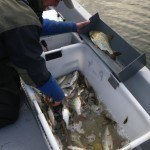 Mainbefischung 34