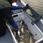 WRRL Befischung 38