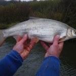 WRRL Befischung 44
