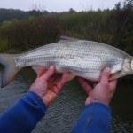 WRRL Befischung 45