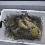 WRRL Befischung 46