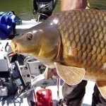 Fuldabefischung 13