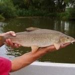 Fuldabefischung 17
