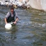 Befischung WKS Blumer Wehr 6