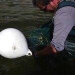 Befischung WKS Blumer Wehr 8