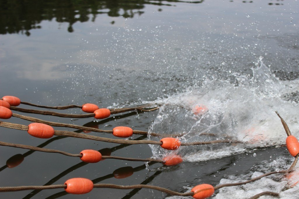 E-Fischen juli 2014 (5)