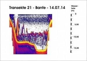Transekte 21 - Banfe - 14.07.14