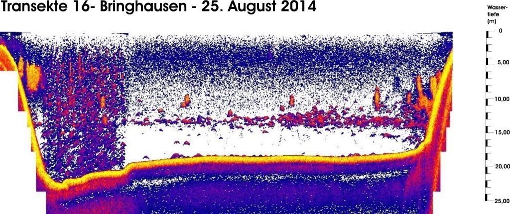 T 16 - Bringhausen - 25.08.14