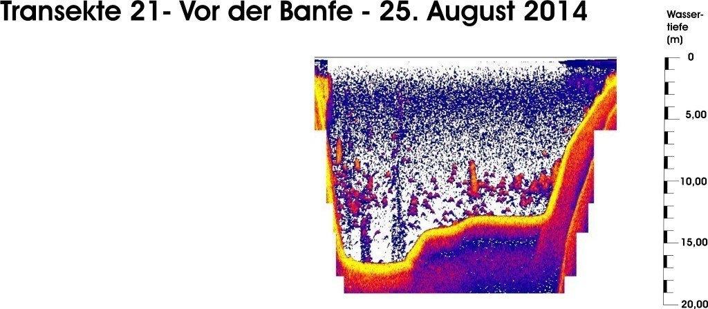 T 21 - Vor der Banfe - 25.08.14