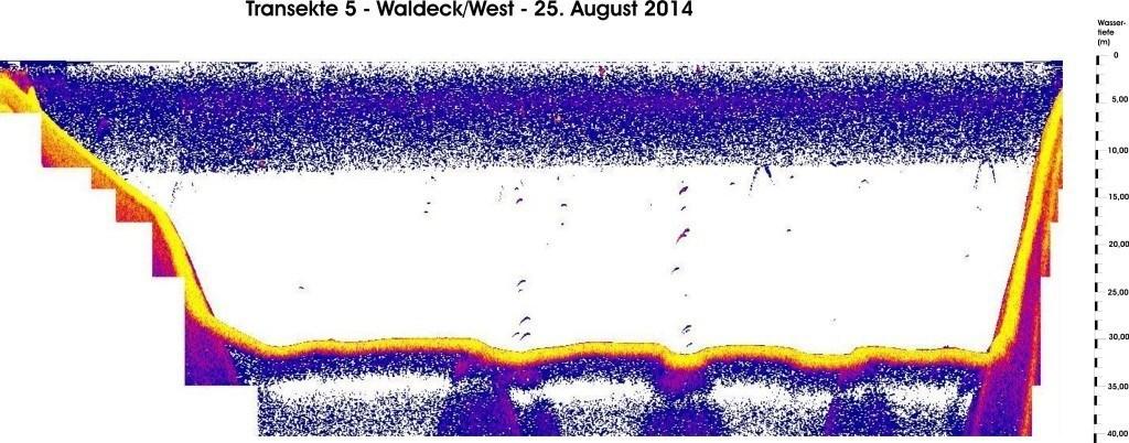 T 5 - Waldeck West - 25.08.14