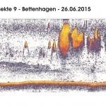 Transekte IX - Bettenhagen - 24.06.15