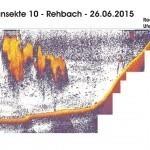 Transekte X - Rehbach - 24.06.15