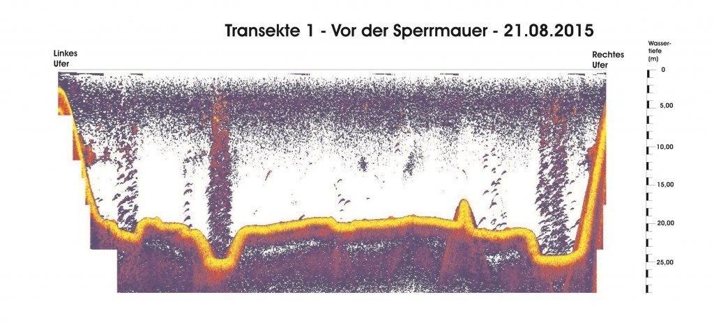 Transekte 1 - 21.08.15