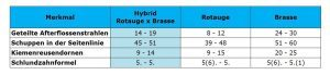 merkmal-hybrid-rotauge-x-brasse