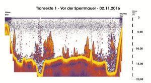 transekte-i-vor-der-sperrmauer-vom-02-11-16